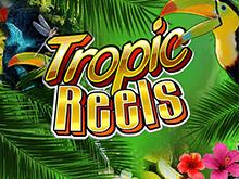 Тропические Катушки
